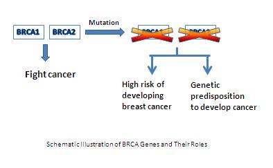 BRCA genes_Basic_CPD