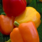 More-peppers_580768-m