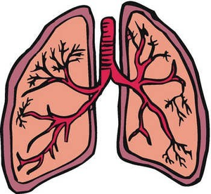 Lung cartoon_lung-md
