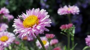 Spring flowers-fly-garden_Pexels